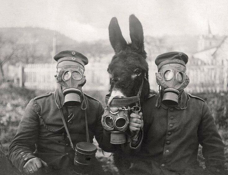 Soldiers and horse in gas masks