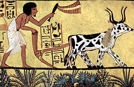 Ploughing in Ancient Egypt